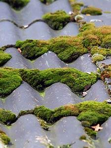 Dachsanierung Dachdecker Angebot Erstellen